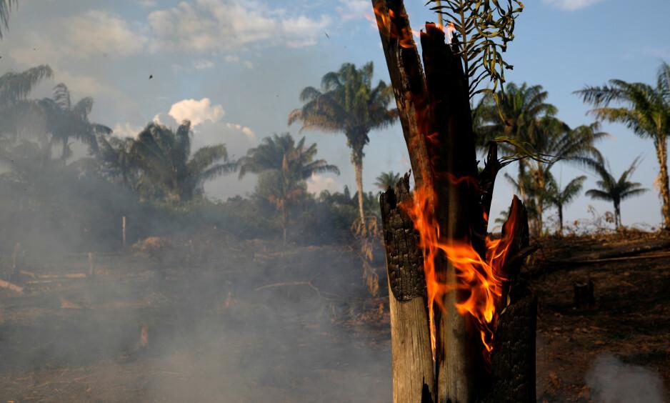 REKORDMANGE SKOGBRANNER: I fjor ble det registrert i underkant av 40 000 skogbranner i Amazonas-regnskogen. Hittil i år er det blitt registrert over 72 000 skogbranner. Foto: Bruno Kelly / Reuters / NTB scanpix