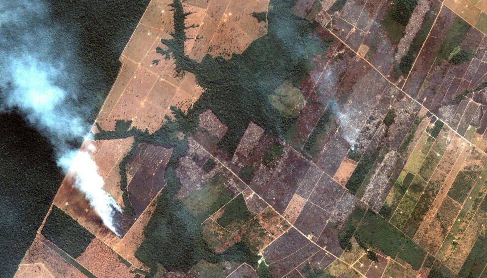 BRASIL BRENNER: Så langt i år har det vært flere enn 72 000 skogbranner i Brasil. Flere enn halvparten av dem har skjedd i Amazonas. Her et satelittbilde som viser noe av ødeleggelsen. Foto: AP / NTB Scanpix