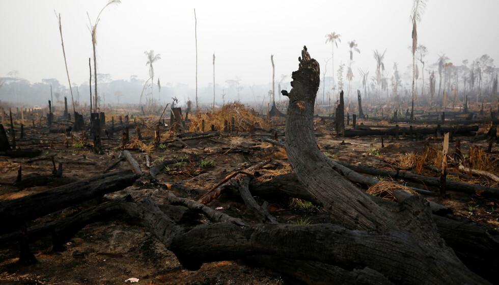 BRENNER: Brannene i Amazonas denne sommeren har vakt oppsikt, og fått betydelig medieoppmerksomhet. Foto: Reuters / Bruno Kelly