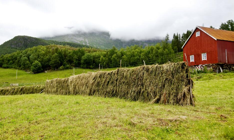 SMÅTT OG GODT: Er veganere og miljøbevegelsen den største trusselen mot småskala landbruk i Norge? Er det ikke heller politikere og de store aktørene i landbruksbransjen som er problemet, spør innsenderen. Foto: Kyrre Lien / NTB Scanpix