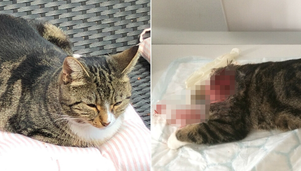 FUNNET DØD: Huskatten Trixie ble funnet drept uten hodet. Foto: Katter i Nød / Privat