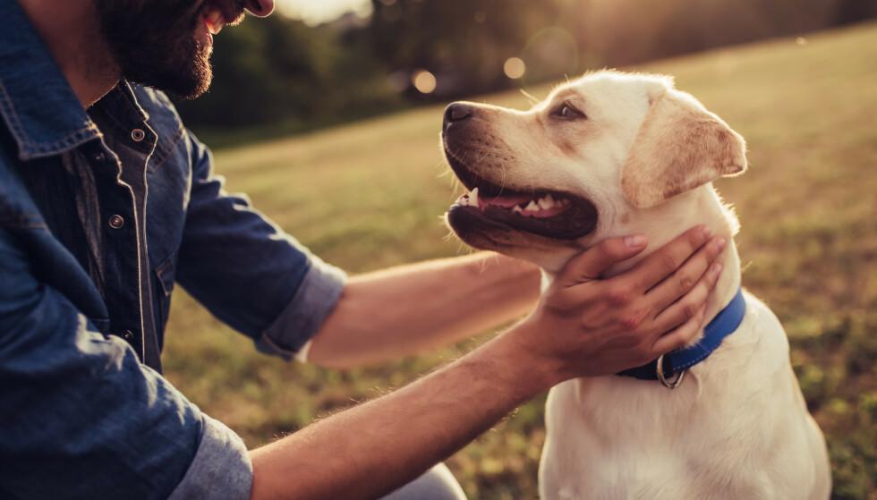 UKJENT ÅRSAK: I en ny oppdatering tirsdag opplyser Veterinærinstituttet at de ennå ikke vet hva som er årsaken til at et tjuetall hunder har dødd. Illustrasjonsfoto: Shutterstock