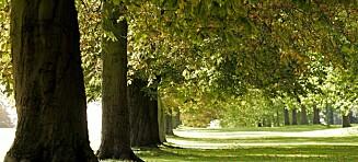 Rapport: 58 prosent av Europas innfødte trær står i fare for utryddelse
