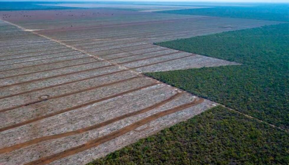 LOVLIG AVSKOGING: I Cerrado i Brasil avskoges store områder, helt lovlig. Nå jobber miljøorganisasjonene for å få med Brasils president - og selskapene som opererer i området - på en avtale lik den som ble gjort for soya i Amazonas. Foto: Jim Wickens, Ecostorm / Mighty Earth