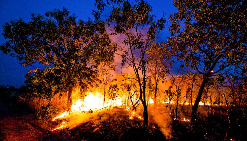 DAGLIGDAGS: Det er ikke bare Amazonas som brenner. I Cerrrado, sør i Brasil, ryddes skog i stortstilt tempo med myndighetenes velsignelse. Foto: Mighty Earth