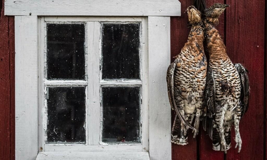 - FLERE OVERRASKELSER: «Jeg jakter både rådyr, skogsfugl og gås, arter som det er greit å ha litt ekstra futt i ladningen på», skriver Stenersen, som har forsøkt fire ulike patroner.