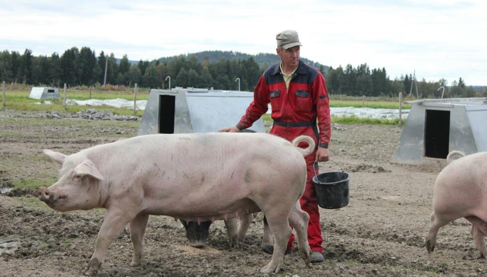 FRILANDSGRIS: Det koster litt mer å gi grisene et lykkelig liv. Det får vi råd til, om vi spiser litt mindre gris, tror grisebonde Heinrich Jung. Foto: Iselin Lindstad Hauge