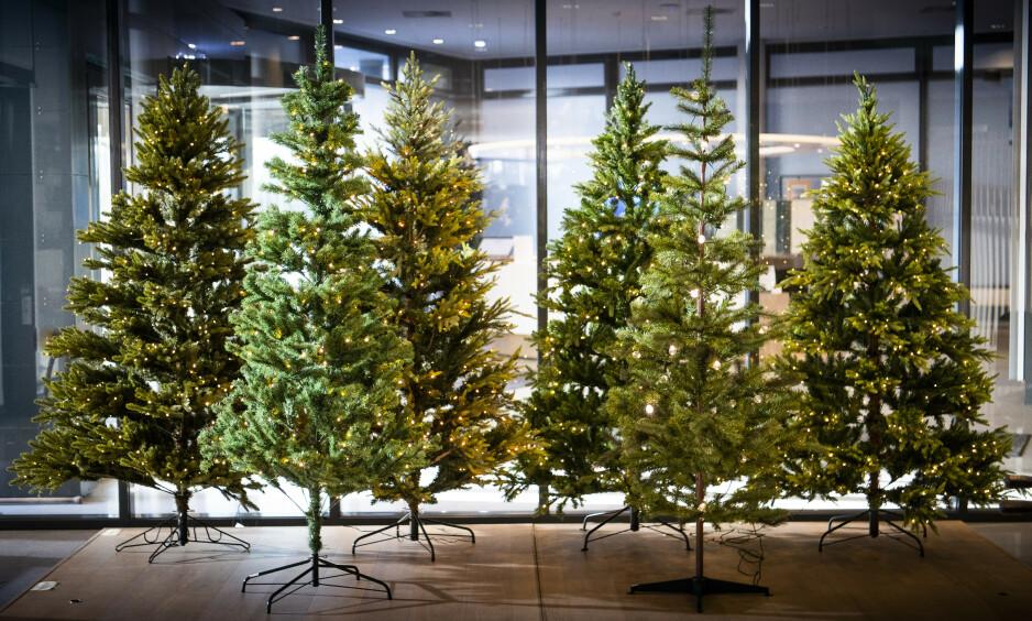 EN LITEN SKOG MED JULESTEMNING: Det er lett å la seg lure av de kunstige juletrærne, på avstand. Her er de seks eksemplarene vi vurderte. Foto: Lars Eivind Bones