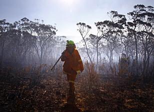 FORTSETTER: En brannkvinne skuer ut over ødeleggelsene noen av brannene har påført Blackheath, som ligger 70 kilometer fra Sydney. Foto: David Gray / Reuters / Scanpix