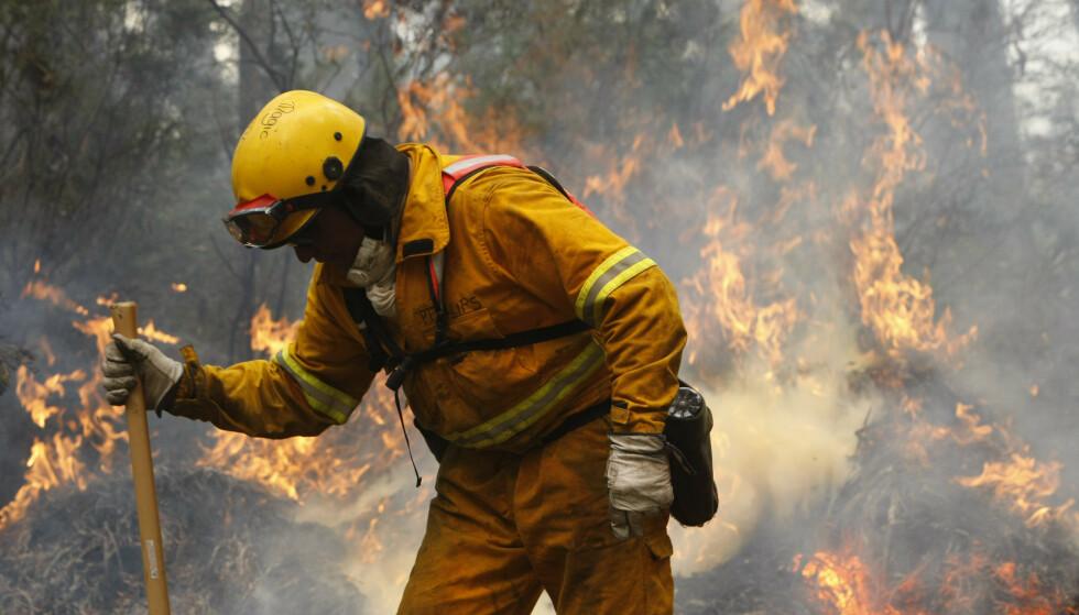VANSKELIG JOBB: En brannmann forsøker å få kontroll over en brann nær byen Reefton, som ligger 96 kilometer fra Melbourne. Foto: Mick Tsikas / Reuters / Scanpix