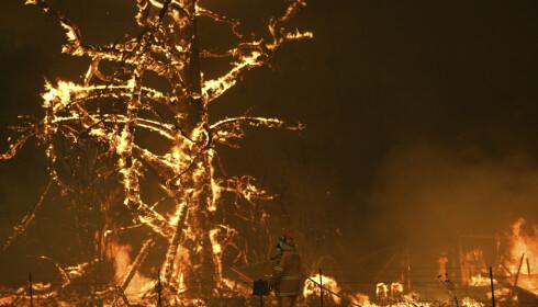 VERRE OG VERRE: Denne brannen i Gosper i Blue Mountains utenfor Sydney er ute av kontroll - som rundt 200 andre skogbranner i Australia. Foto: Dan Himbrechts, AAP/AP/NTB Scanpix.