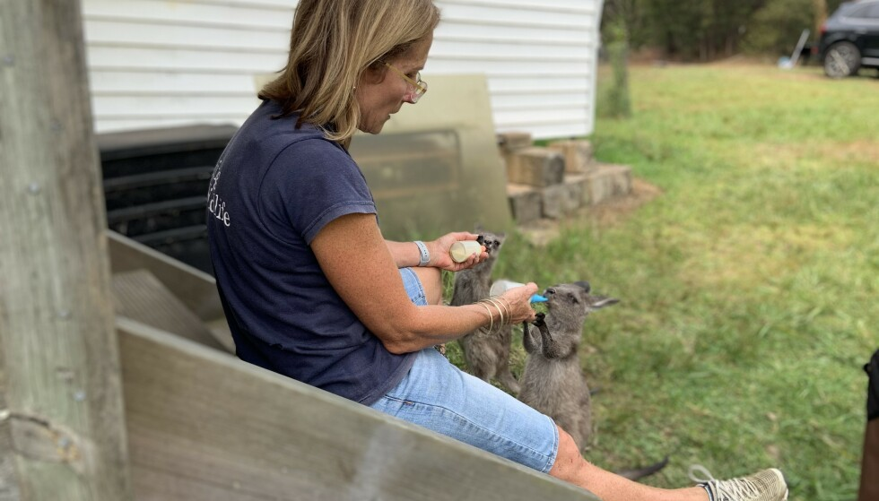 SKIPPY: En massiv frivillig innsats sørger fra en rekke organisasjoner tar imot dyr fra Australias unike fauna. Kengurubabyene Molley og Melba blir flasket opp av Lorraine Woodward fra Sidney Wildlife Rescue. De tar imot pengedonasjoner: https://www.gofundme.com/f/bush-fire-and-drought-relief-emergency-fund?fbclid=IwAR3N-GQHnAUh_Ys9qivZRF2VXJvHRaOl6ZbGAPoz5QFIPnehQUhrzoKWvEU Foto: Geir Ramnefjell
