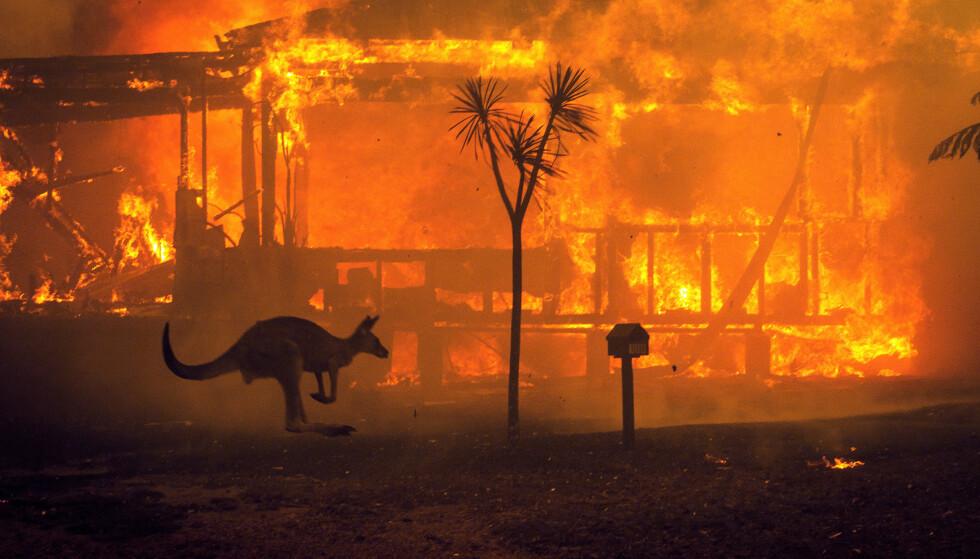 FLAMMEHAV: Brannene i Australia har rammet et område på størrelse med nesten hele Sør-Norge, over 50 000 kvadratkilometer. De har drept minst 24 mennesker, tatt over 2400 hus og drept anslagsvis 1,5 milliarder dyr. Foto: Matthew Abbott / New York Times