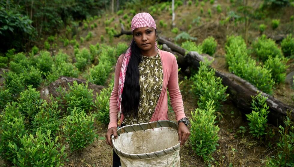 KAN VI HJELPE?: Hva kan Norges bidrag være til å redusere finansieringen av narkotikaindustrien som ødelegger hundretusener av liv i Latin-Amerika og som er i ferd med å destabilisere hele verdensdeler, spør kronikkforfatteren. Her en kvinne som har kommet fra Venezuela til Colombia for å livnære seg på kokainplukking. Foto: Luis Robayo / AFP / NTB Scanpix