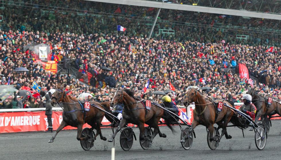 SÅ NÆR: Looking Superb var svært nær ved å sjokkere i fjor. Her er hesten i midten mellom Readly Express (t.h.) og vinneren Belina Josselyn. Foto: Eirik Stenhaug / Ecuus Media