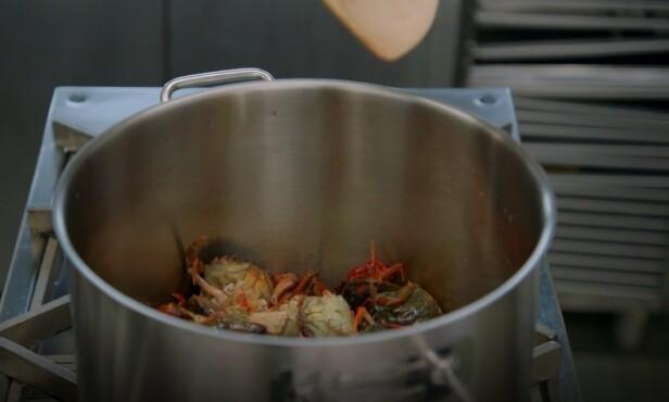 LEVENDE: Krabbene ble kastet direkte i en glovarm gryte, for så å bli knust med ei tresleiv. Foto: TV3