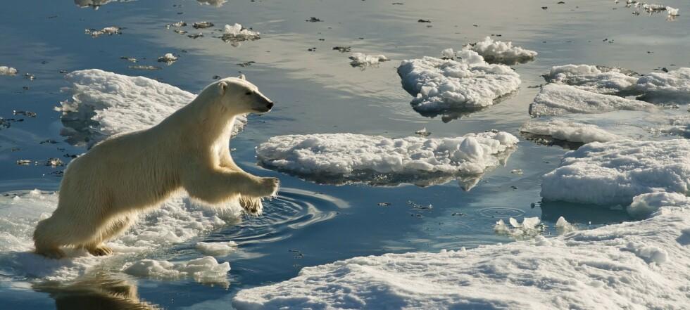 - Isbjørner kan forsvinne