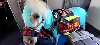 Tok med hest på flyet