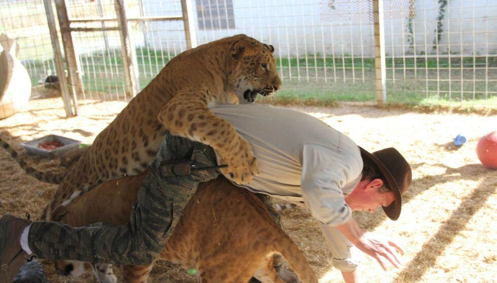 - NARKOPARK: Kirkham mener at samtlige ansatte og Exotic selv var rusa i lange perioder sammenhengende. Samtidig skulle de håndtere over 200 eksotiske katter, som aktivister mente ble mishandlet. Foto: Privat