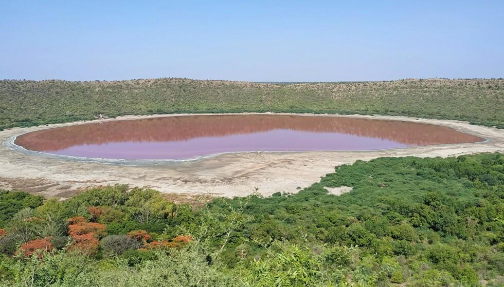 BLE PLUTSELIG ROSA: Innsjøen Lonar i India har aldri hatt en sterkere rødrosa-farge, sier en lokal geolog. Forskere skal nå finne årsaken til at den skifter farge. Foto: STR / AFP / NTB scanpix