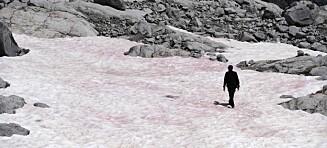 Rosa snø i Alpene