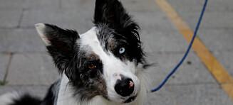 Ny lov for hundeeiere