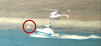 Jager isbjørn med helikopter