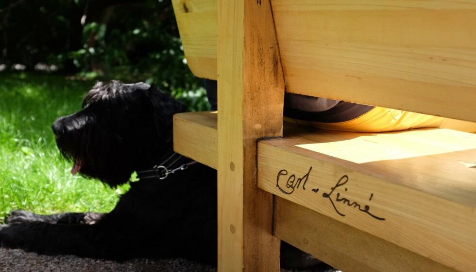OMSTRIDT: Det er denne benken som står ved det som kalles Systematisk hage inne i Botanisk hage på Tøyen i Oslo som vekker reaksjoner. Carl von Linné kalles den moderne systematikkens far, men er kanskje mindre kjent for sine raseteorier. Foto: Truong Vu Pham/NHM