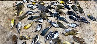 Massedød ryster fuglekikkere