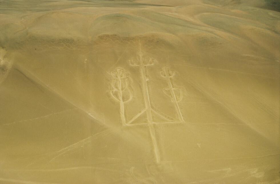 LYSEKRONEN: Denne geoglyfen kalles lysekrone-geoglyfen. Foto: Shutterstock
