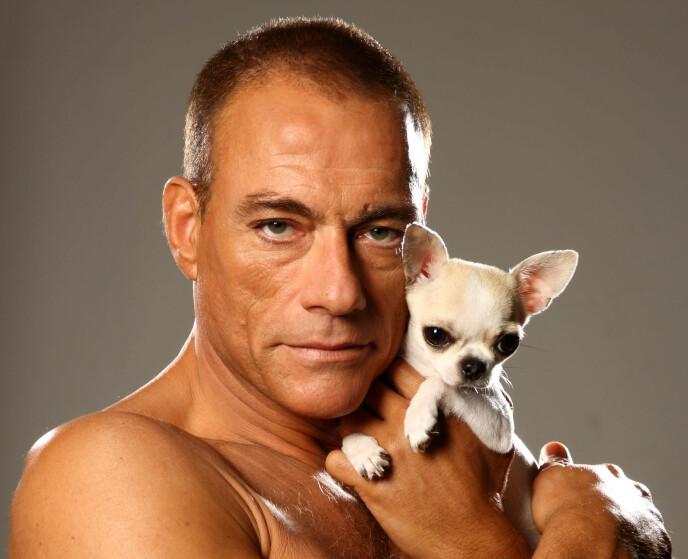 DYREVENN: Skuespiller Jean-Claude Van Damme har selv en chihuahua. Foto: ITV / Rex / NTB
