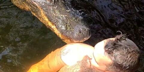 Image: Blir bitt av alligatoren