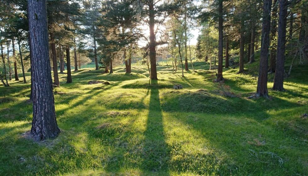 VERDIFULLT: Gravfeltet på Vang er et av svært få minneområder i Sør-Trøndelag som er vurdert til å ha nasjonal verdi. Foto: Oppdal kommune