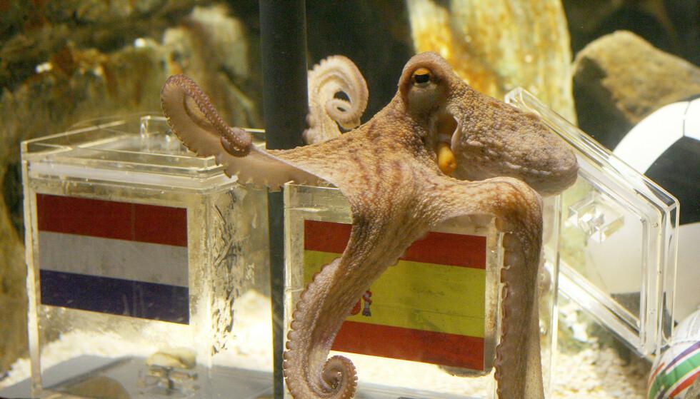 «ORAKEL»: Det historiske øyeblikket da blekkspruten Paul korrekt utpeker Spania som framtidig vinner av fotball-VM 2010. Foto: Patrik Stollarz / AFP / NTB