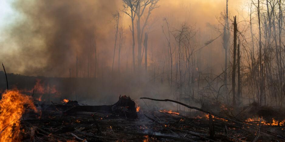 Rapport: Avskogingen kobles til lakseprodusent
