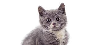 Bør vi drepe katter?