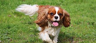 Vil ha slutt på avl av populære hunder