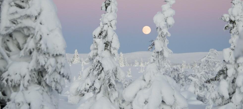 Knuser drømmen om hvit jul