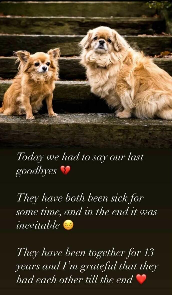 TRIST: Lars Kristian Eriksen deler at de to hundene har vært syke over lengre tid. Foto: Skjermdump fra Instagram.