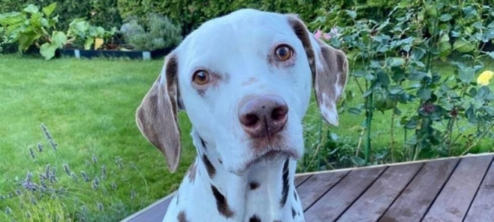 Hunden Zajka reddet ut av rasstedet: - Helt fantastisk