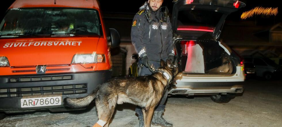 Hunden Piko (7) skadd i redningsarbeidet