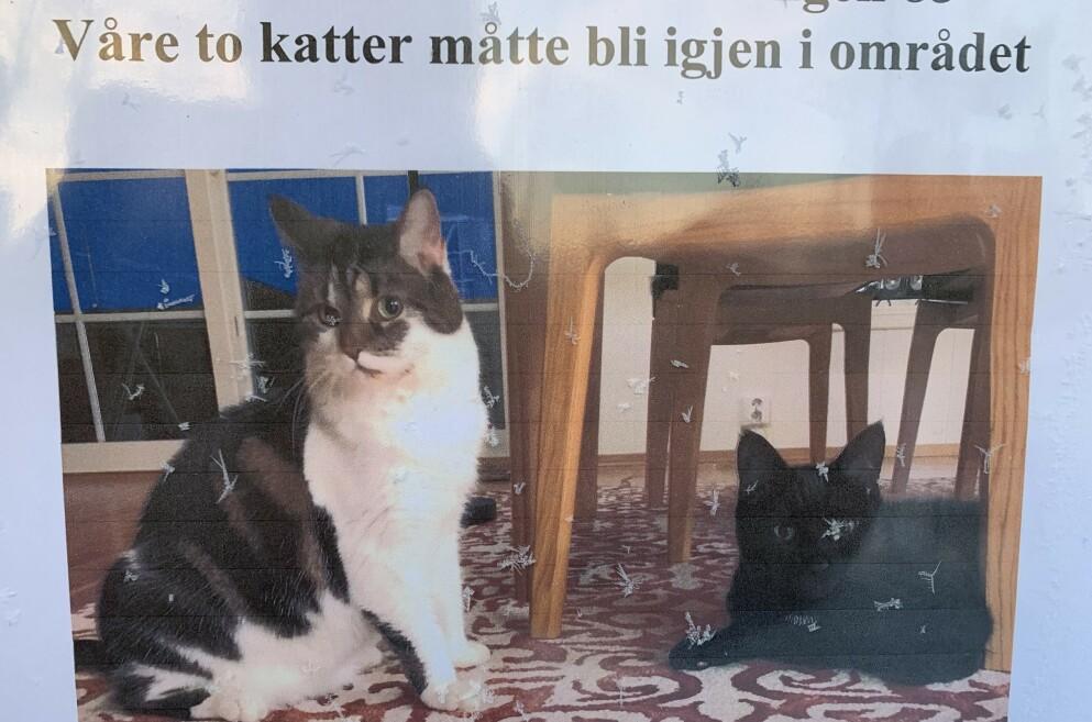 ETTERLYST OG SAVNET: Iris (12) og Elmo (9) på etterlysningsplakaten på bussholdeplassen i Ask etter skredet. Foto: Øystein Andersen / Dagbladet.