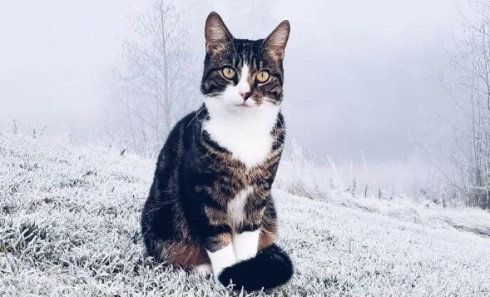 EIERNE FELTE NOEN TÅRER: Katten Misha foran sitt gamle hjem før jul. Nå går raskanten der hun sitter. Foto: Privat.