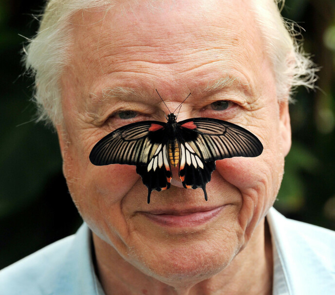 GLAD I DYR: Attenborough med sommerfugl. Foto: NTB