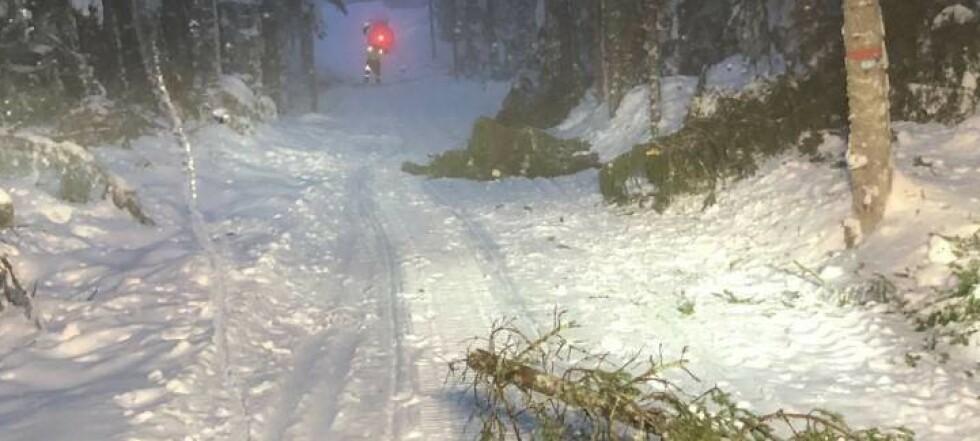 Skiforeningen: Pass opp for fallende trær