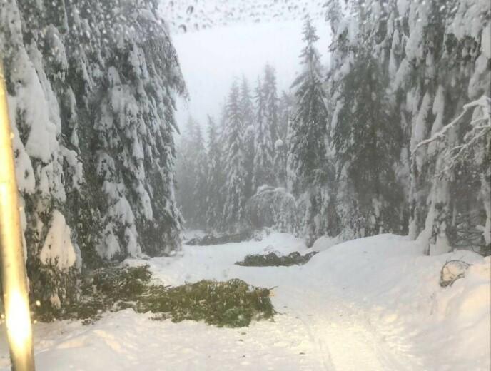 GÅ I ÅPENT LENDE: Kraftig nedbør og vind gjør at Skiforeningen nå advarer folk om å gå i skogen. Bildet er fra Vestmarka i Asker i dag. Foto: Simon Johansson, Skiforeningen