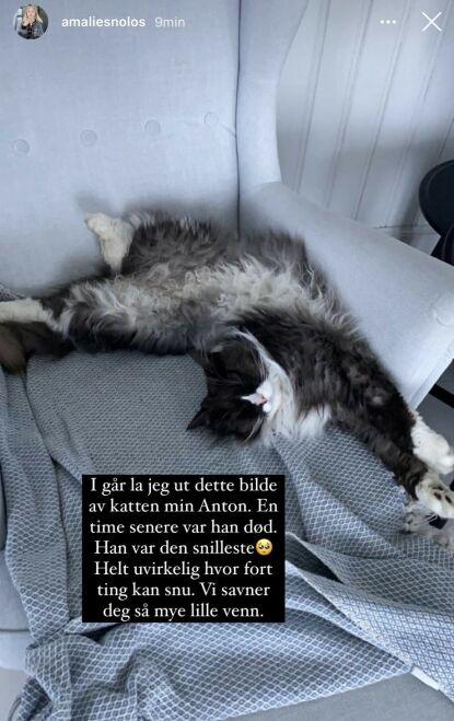 GIKK BORT: Katten Anton ble ti år gammel. Foto: Privat, gjengitt med tillatelse