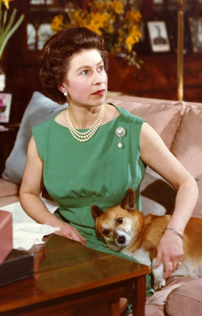 HUNDEGLAD: Dronning Elizabeth har eid over 30 hunder siden hun tok over som monark. Her i 1969. Foto: Joan Williams /Rex / NTB