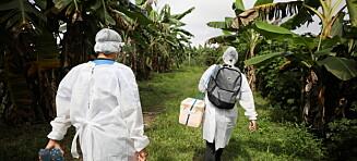 Brasil: Variant tre ganger så smittsom