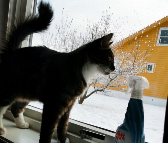 GLAD KATT: Også kattene til Sabina likte vaskesprayen.